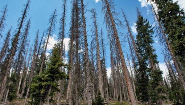 dry-logs